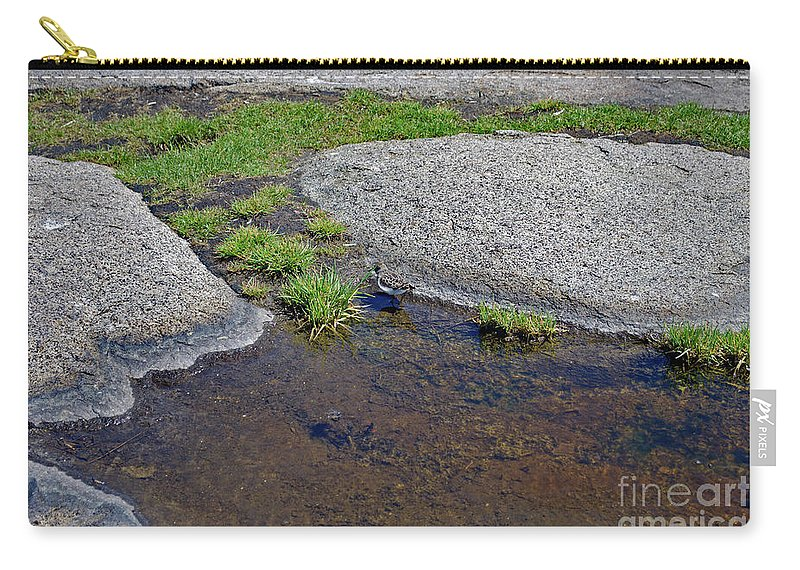 Names Of Birds Carry-all Pouch featuring the photograph Mountain Sanderling by Skip Willits