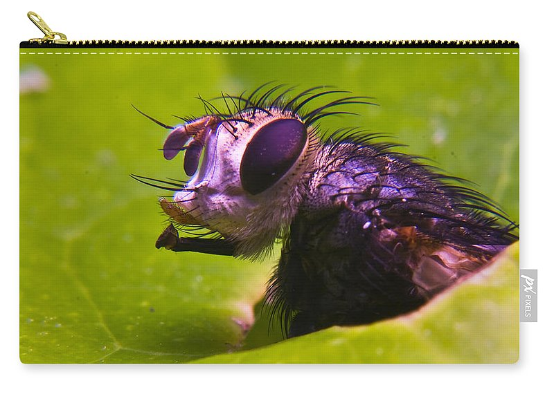 Fly Carry-all Pouch featuring the photograph Mr. Fly by Douglas Barnett