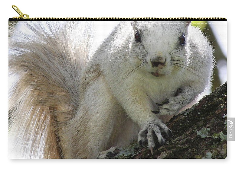 Squirrel Carry-all Pouch featuring the photograph Mr. Inquisitive II by Betsy Knapp