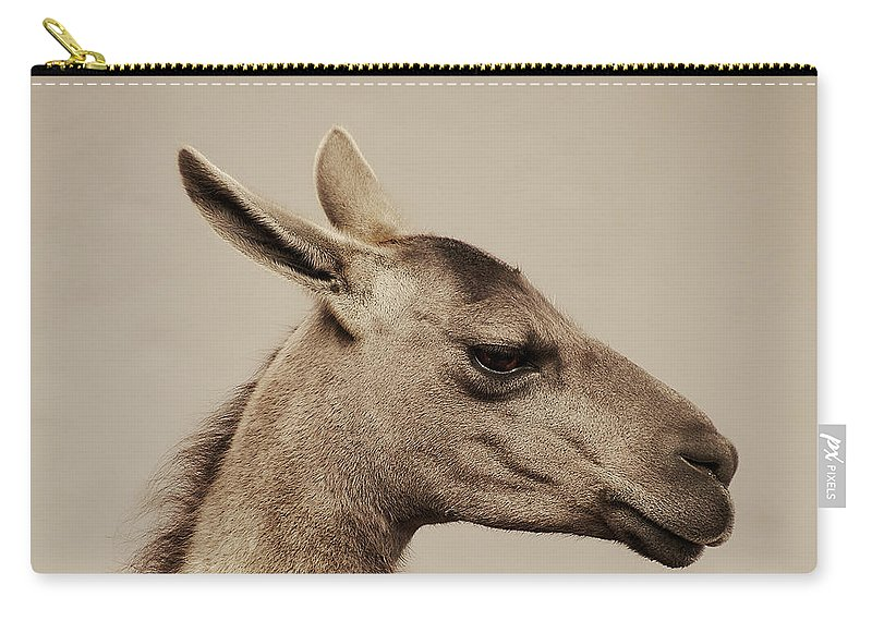 Llama Carry-all Pouch featuring the photograph mr Llama by Gustavo Ramirez