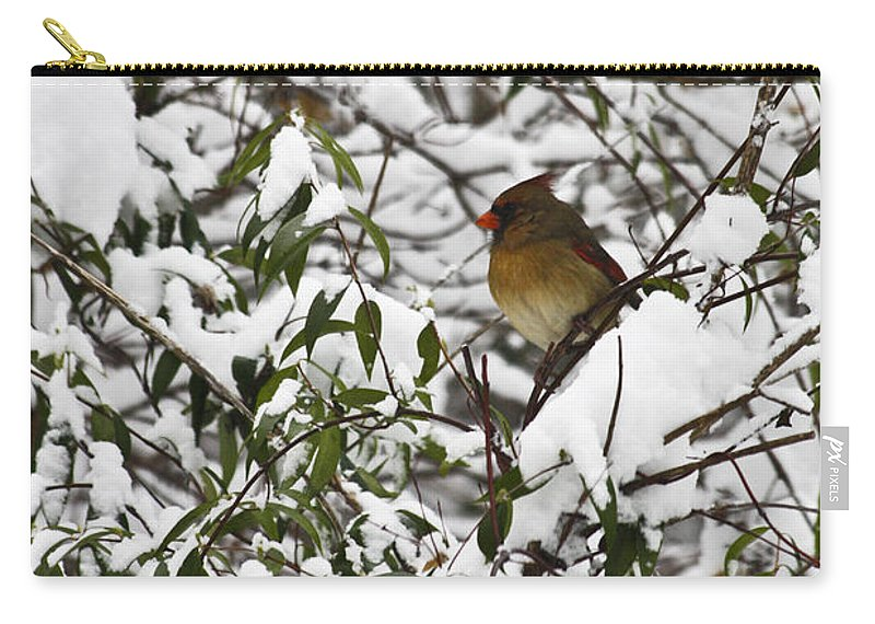 Cardinal Carry-all Pouch featuring the photograph Mrs Cardinal In The Jasmine by Teresa Mucha