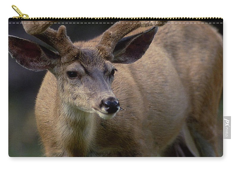 Arizona Carry-all Pouch featuring the photograph Mule Deer In Velvet 03 by Michael Scully