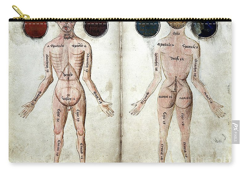Historic Carry-all Pouch featuring the photograph Muscle Man, Brains Ventricles, 15th by Wellcome Images