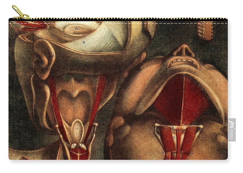 Historic Carry-all Pouch featuring the photograph Muscles Of Eye And Larynx, Illustration by Wellcome Images