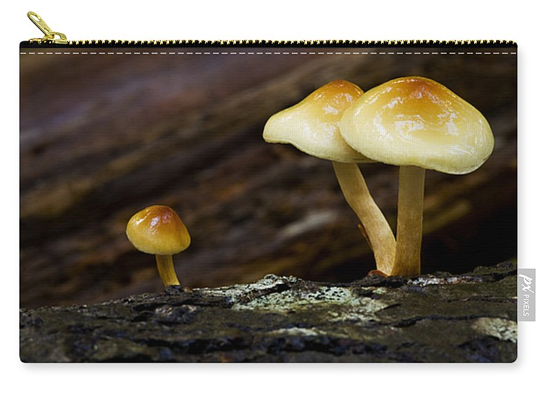 Mushrooms Carry-all Pouch featuring the photograph Mushroom Trio by Bob Christopher
