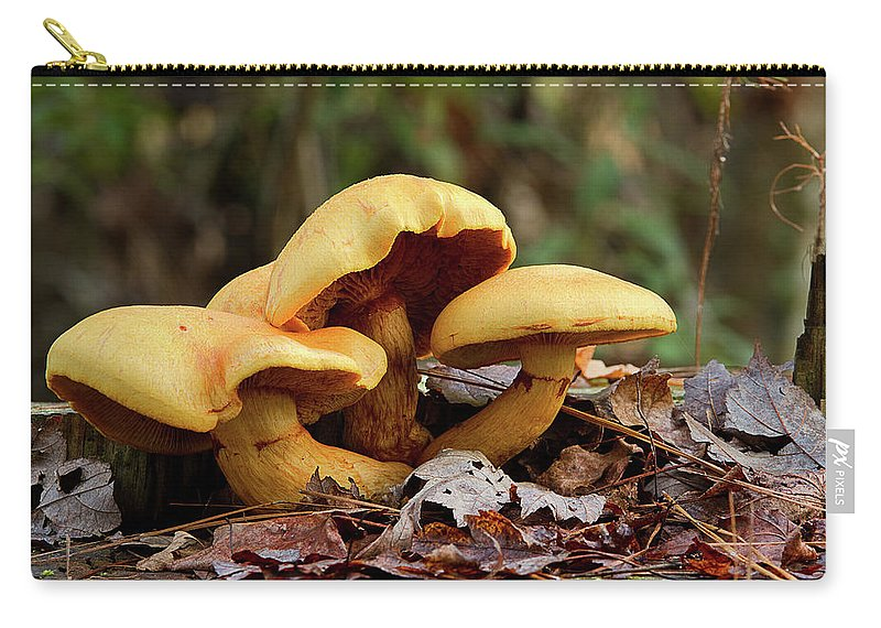 Mushrooms Carry-all Pouch featuring the photograph Mushroom Trio by MotionOne Studios