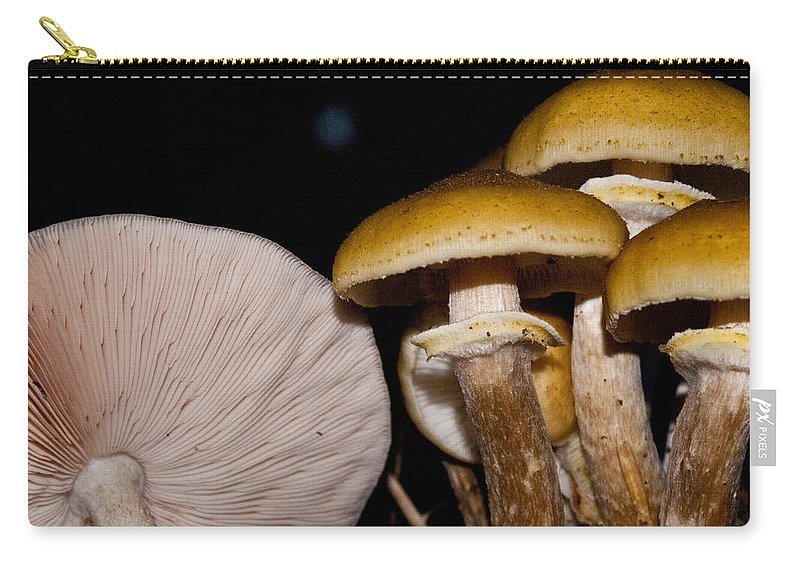 Mushrooms Carry-all Pouch featuring the photograph Mushrooms At Sundown by Douglas Barnett