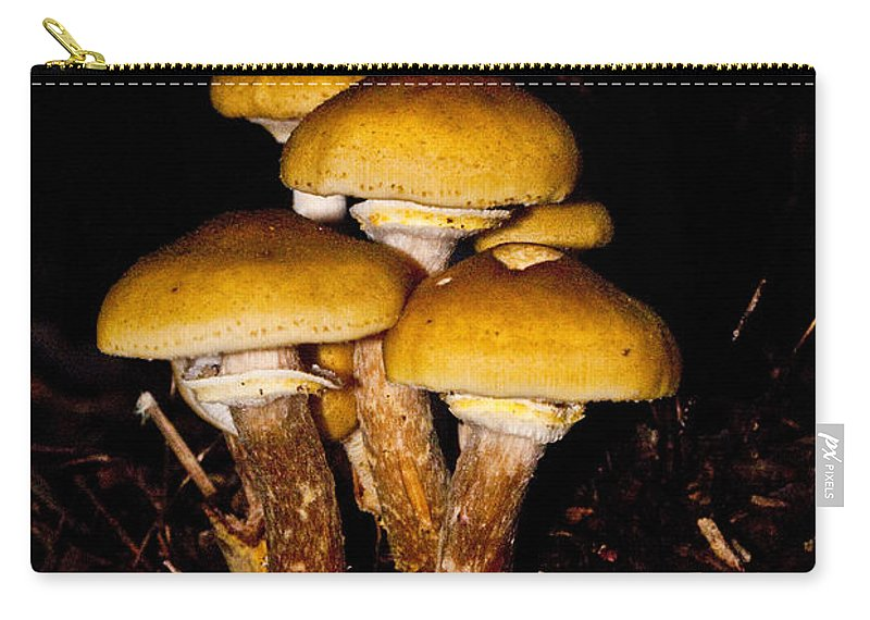Mushrooms Carry-all Pouch featuring the photograph Mushrooms By Night by Douglas Barnett