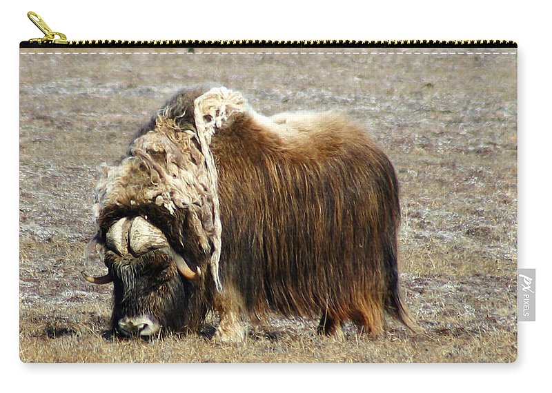 Musk Ox Carry-all Pouch featuring the photograph Musk Ox by Anthony Jones