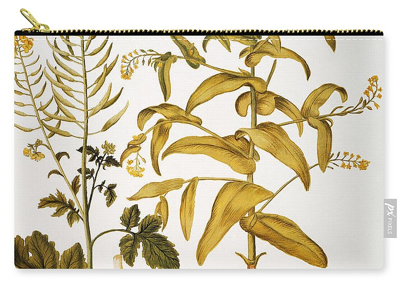1613 Carry-all Pouch featuring the photograph Mustard Plant, 1613 by Granger