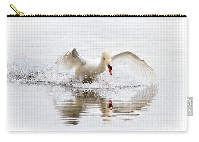 Mute Swan Carry-all Pouch featuring the photograph Mute Swan Landing II by Karen Jorstad