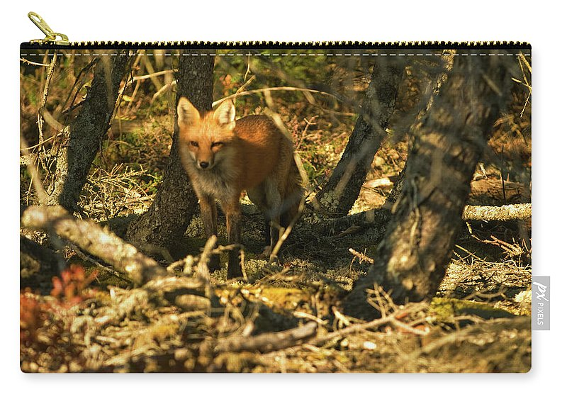 red Fox Carry-all Pouch featuring the photograph My Friend Red by Paul Mangold