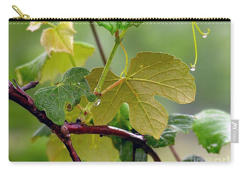 Grapevine Carry-all Pouch featuring the photograph My Grapvine by Robert Meanor