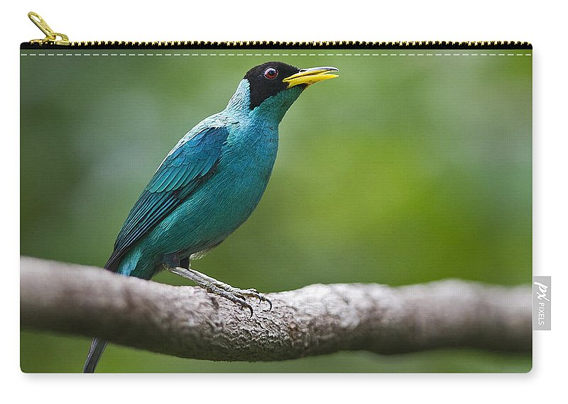 Green Honeycreeper Carry-all Pouch featuring the photograph My Song To You.. by Nina Stavlund