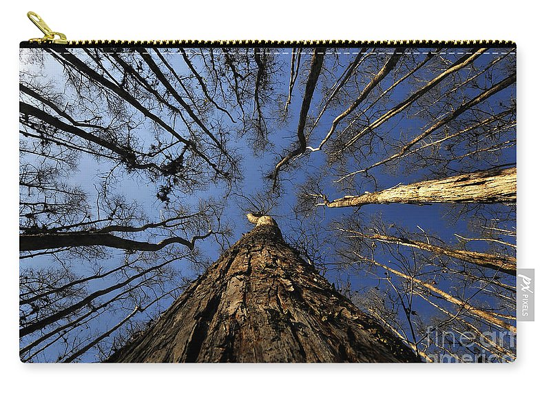 Bald Cypress Trees Carry-all Pouch featuring the photograph Naked Cypress by David Lee Thompson