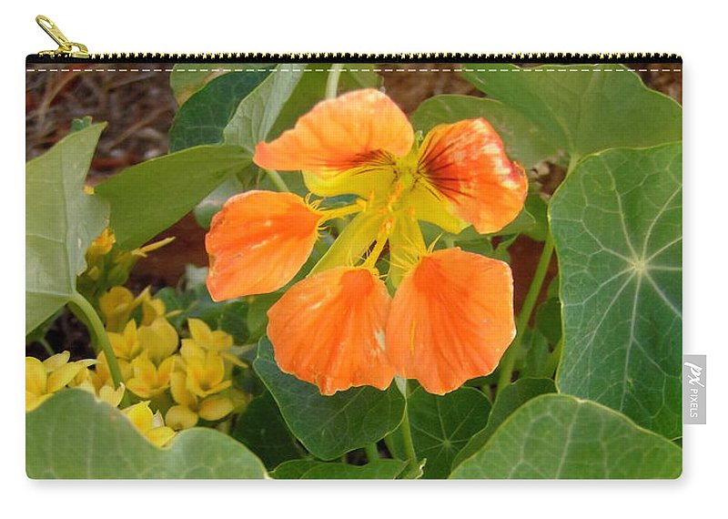 Flowers Carry-all Pouch featuring the photograph Nasturtium by Stephanie Moore