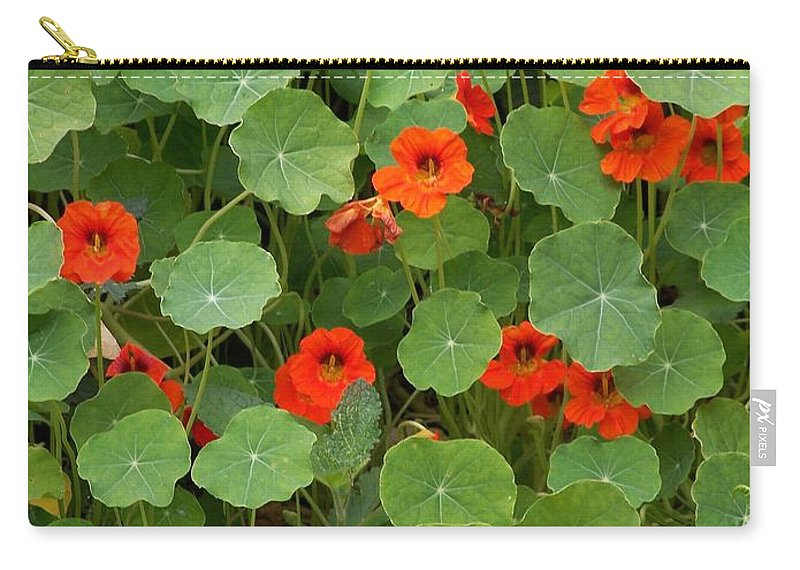 Nasturtiums Carry-all Pouch featuring the photograph Nasturtiums by Gale Cochran-Smith