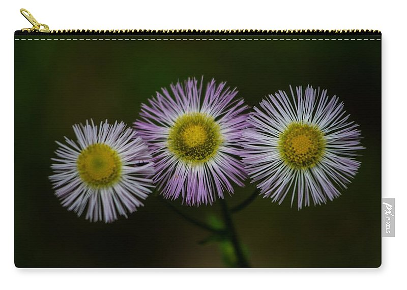 Aster Carry-all Pouch featuring the photograph Nature's Asterisks by Tim Beebe