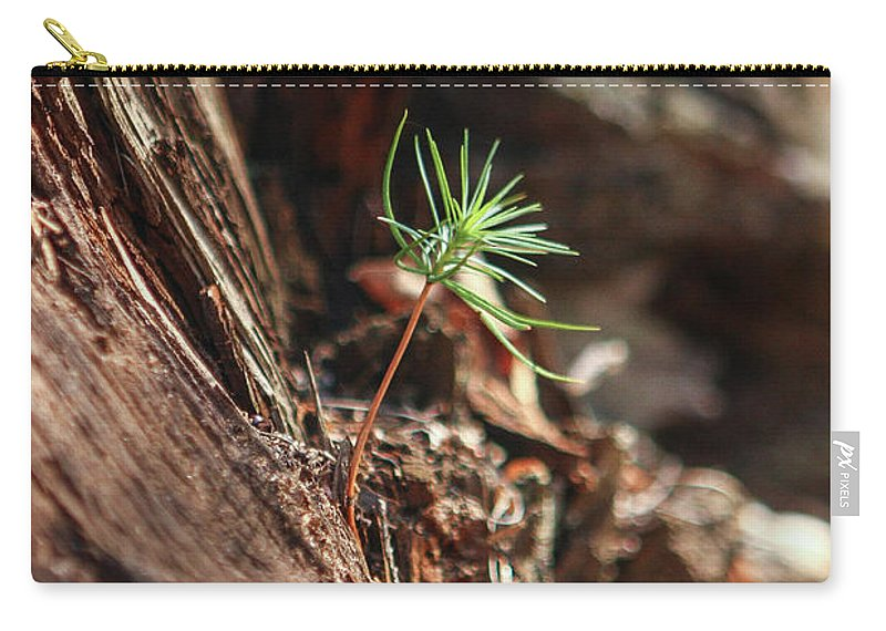 Sapling Carry-all Pouch featuring the photograph Natures Renewal by Martina Schneeberg-Chrisien