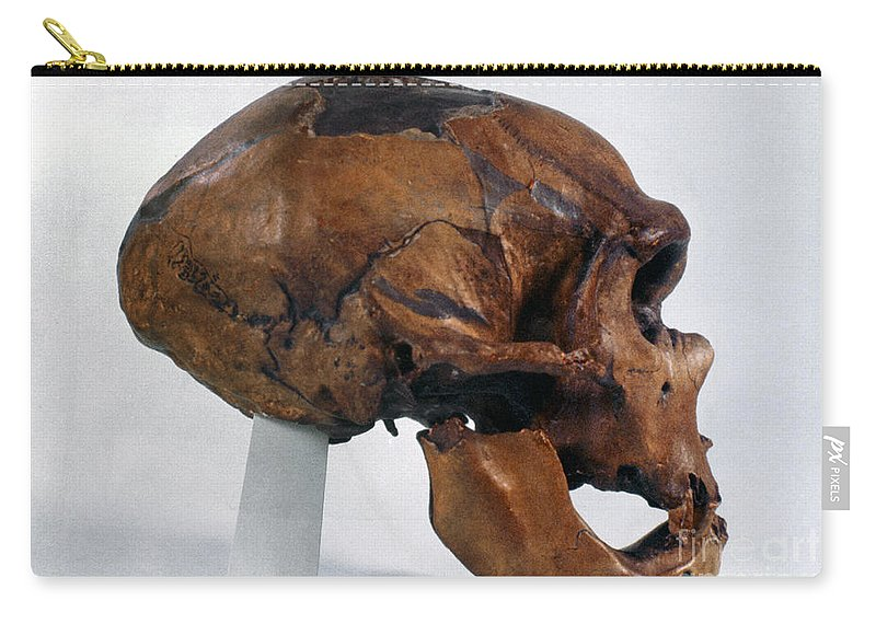 Artifact Carry-all Pouch featuring the photograph Neanderthal Skull by Granger