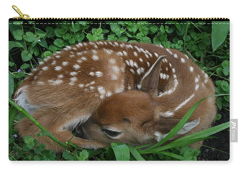 Deer Carry-all Pouch featuring the photograph New Life by Dawn Stone