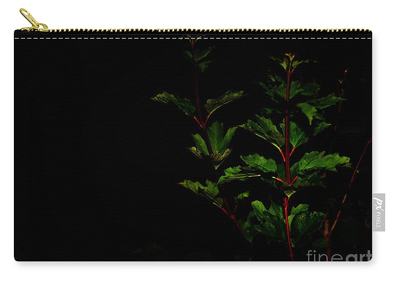 Plant Carry-all Pouch featuring the photograph Night Garden by Linda Shafer