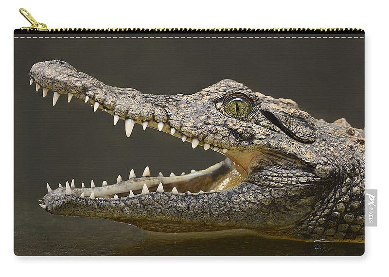 Crocodylus Niloticus Carry-all Pouch featuring the photograph Nile Crocodile by Tony Beck