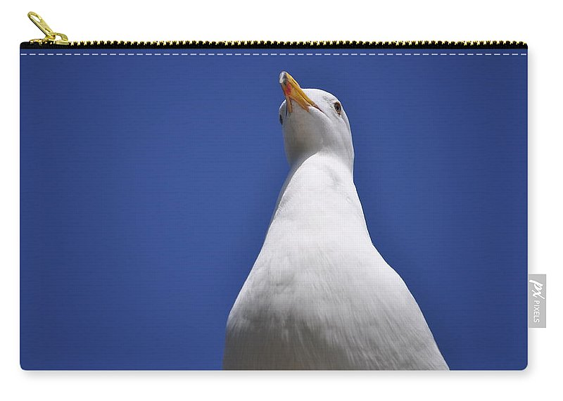 Seagull Carry-all Pouch featuring the photograph Noble by Bridgette Gomes