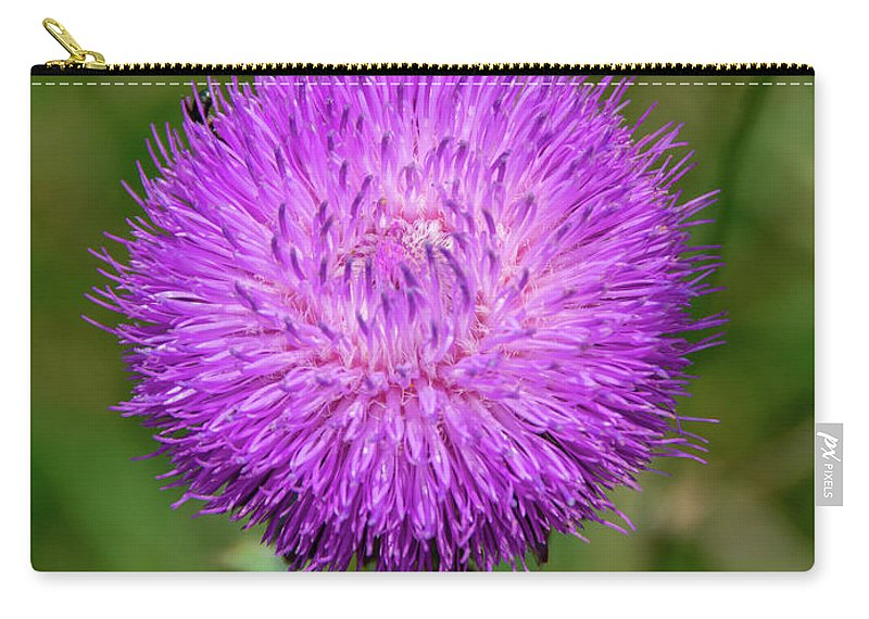 Nature Carry-all Pouch featuring the photograph Nodding Thistle Close-up by Jennifer Wick