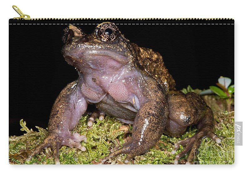 Nora�s Spiny Chest Frog Carry-all Pouch featuring the photograph Noras Spiny Chest Frog by Dant� Fenolio