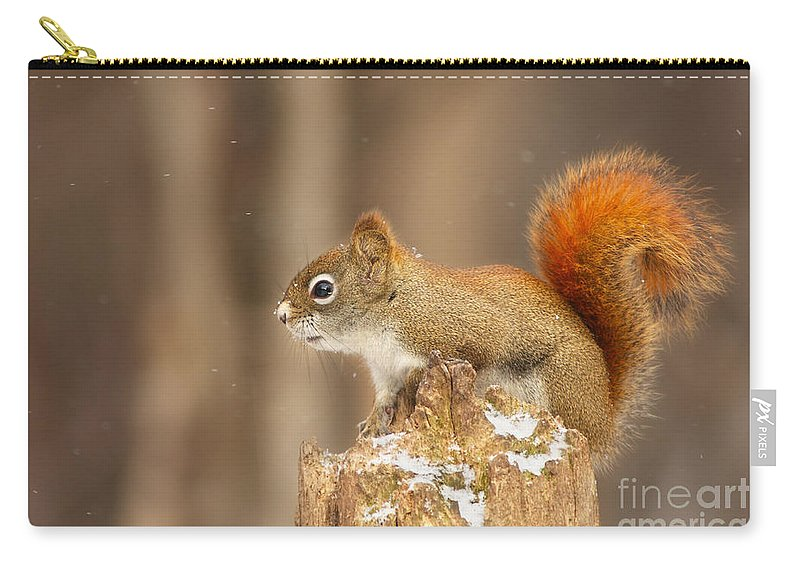 Algonquin Carry-all Pouch featuring the photograph North American Red Squirrel In Winter by Mircea Costina Photography