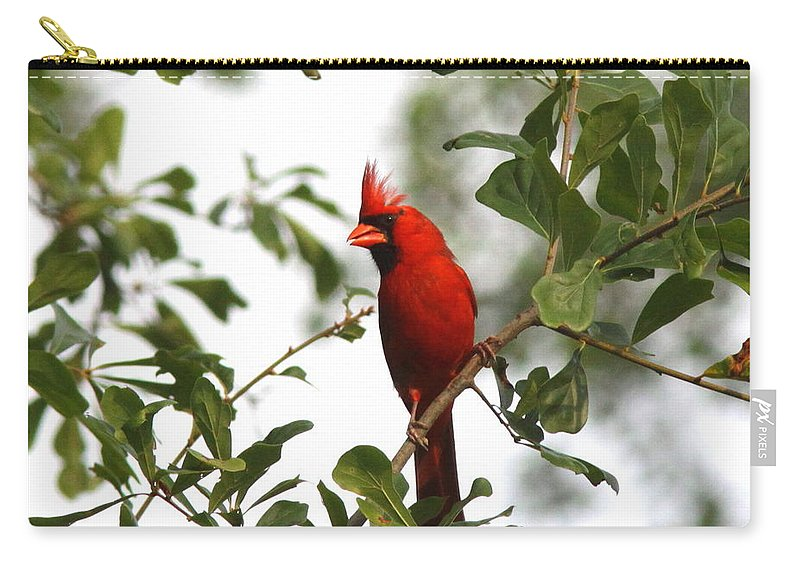 Northern Cardinal Carry-all Pouch featuring the photograph Northern Cardinal - In The Wind by Travis Truelove