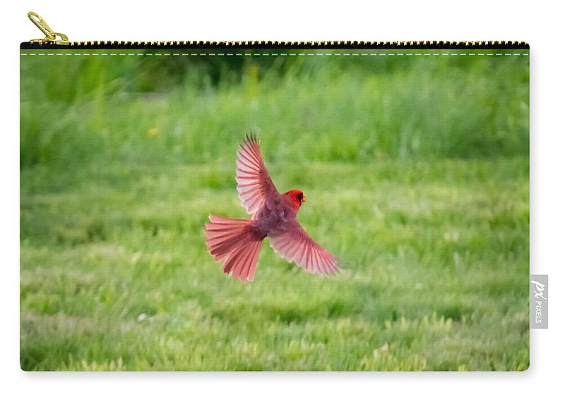 Northern Cardinal Carry-all Pouch featuring the photograph Northern Cardinal In Flight by Jan M Holden