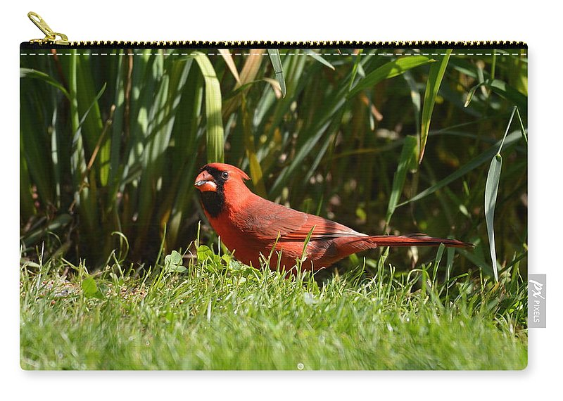 Cardinal Carry-all Pouch featuring the photograph Northern Cardinal by Shelley Smith
