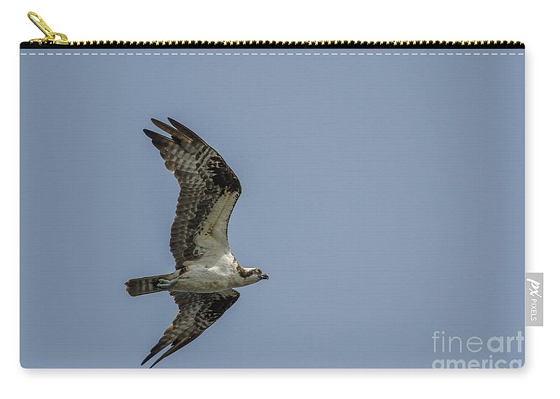 Wildlife Carry-all Pouch featuring the photograph Northern Harrier In Flight by Neil Taitel