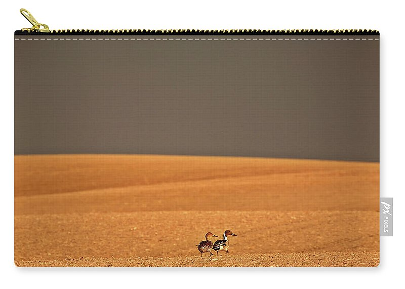 Northern Carry-all Pouch featuring the digital art Northern Pintail Pair Out Walking In Saskatchewan Field by Mark Duffy