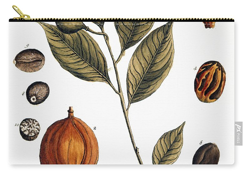 1730s Carry-all Pouch featuring the photograph Nutmeg, 1735 by Granger
