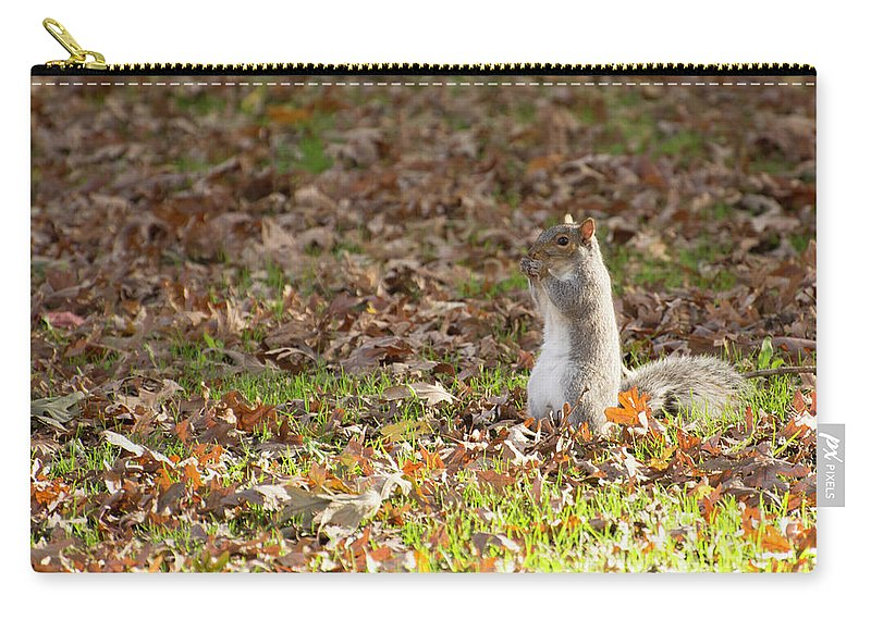 Squirrel Carry-all Pouch featuring the photograph Nuts For Fall by Joan D Squared Photography