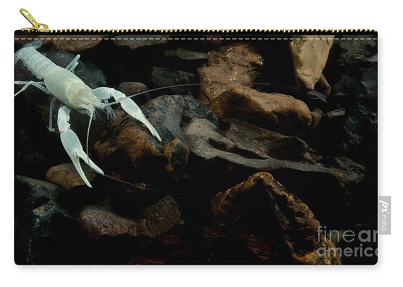 Cave Biology Carry-all Pouch featuring the photograph Oklahoma Cave Crayfish by Dant� Fenolio