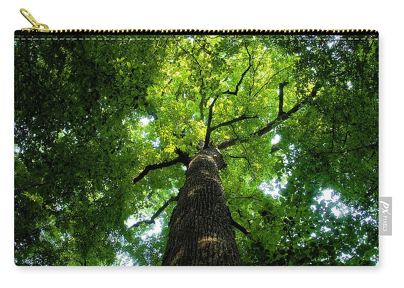Old Growth Forest Carry-all Pouch featuring the painting Old Growth by David Lee Thompson