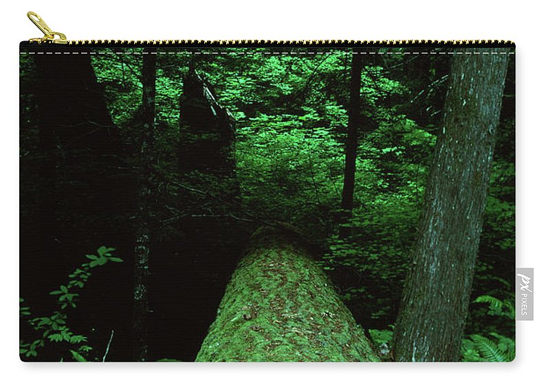 Cascade Carry-all Pouch featuring the photograph Old Growth Forest At Lost Lake On Mount Hood by Rick Bures
