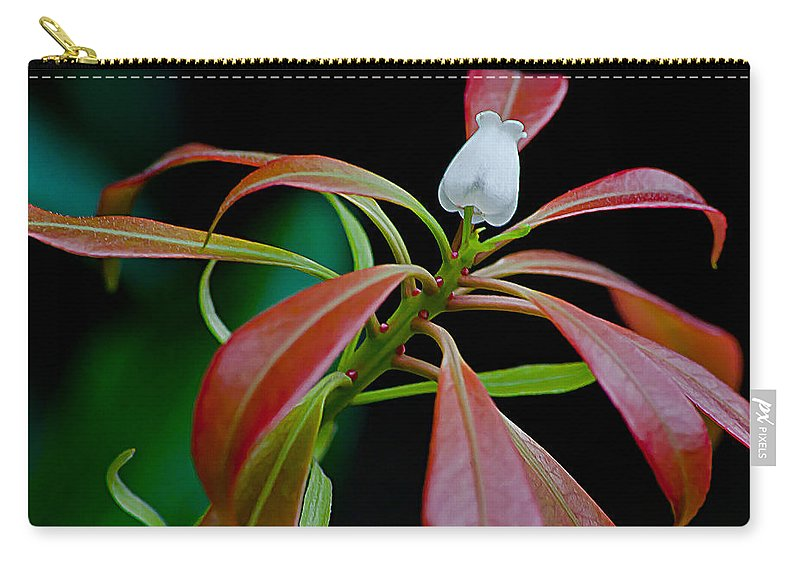One Andromeda Flower With Red New Growth Leaves Carry-all Pouch featuring the photograph One Andromeda by Emerald Studio Photography