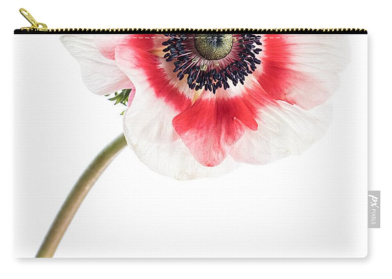 Anemone Carry-all Pouch featuring the photograph One Anemone by Ann Garrett