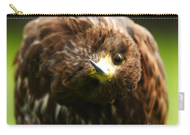 Buzzard Carry-all Pouch featuring the photograph Oops I Have Gone Mad by Angel Ciesniarska