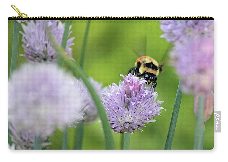 Orange-belted Bumblebee Carry-all Pouch featuring the photograph Orange-belted Bumblebee On Chive Blossoms by Codee Pyke
