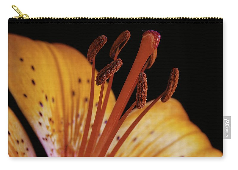 Daylily Carry-all Pouch featuring the photograph Orange Day Lilly On Black by Michael Peychich