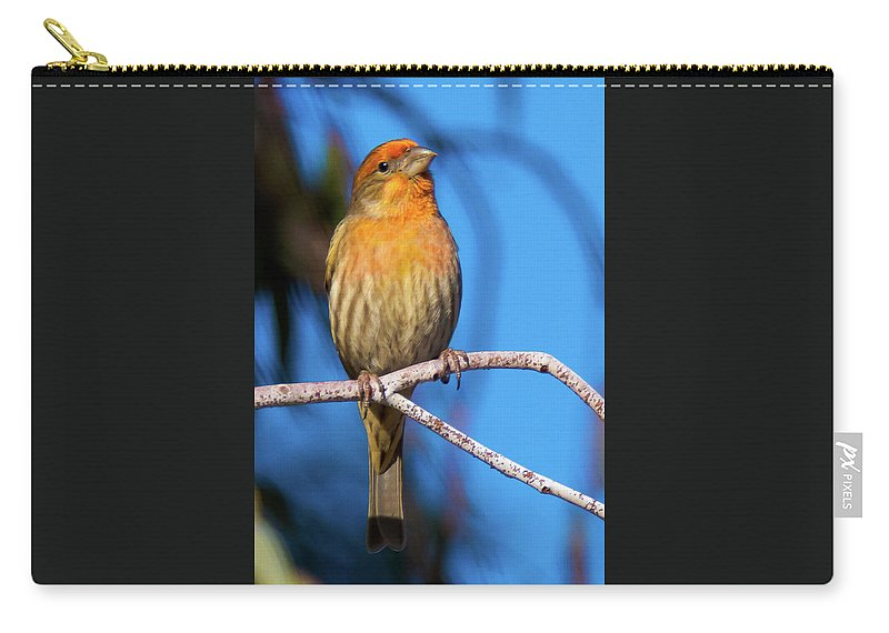 House Finch Carry-all Pouch featuring the photograph Orange Finch by Michael Allred