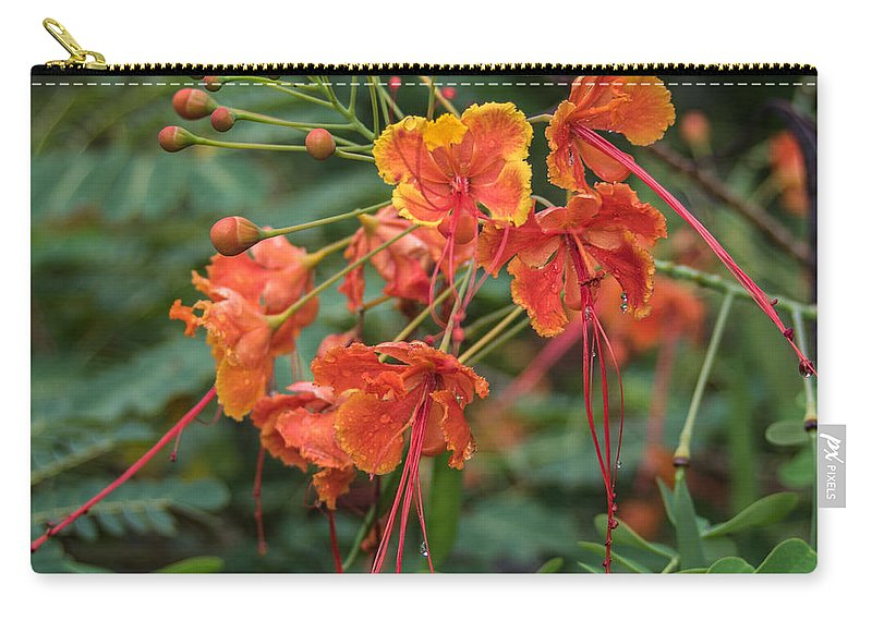 Florida Carry-all Pouch featuring the photograph Orange Poinciana Tree by Jane Luxton