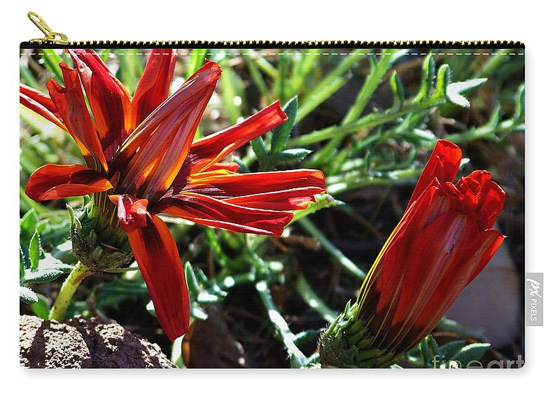 Gazania Carry-all Pouch featuring the photograph Orange Power by Kathy McClure