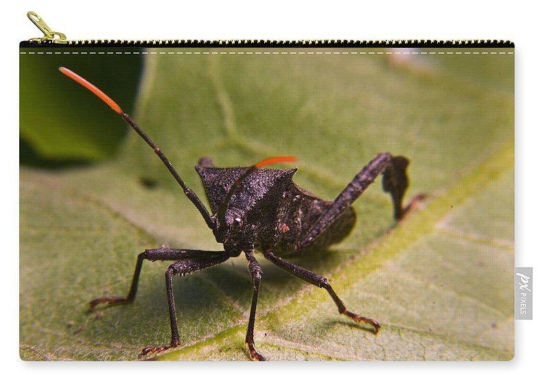 Orange Carry-all Pouch featuring the photograph Orange Tipped Antennae by Douglas Barnett